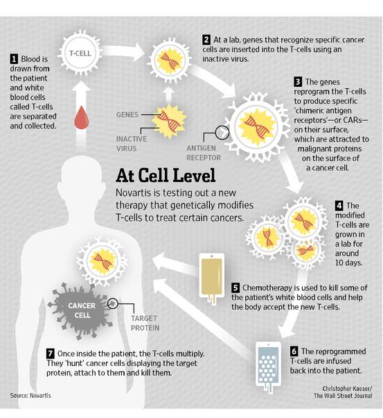 Adoptive Cell Transfer